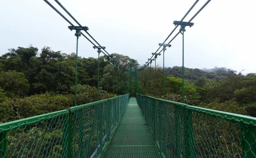 COSTA RICA // Monteverde – Nebelwälder, Hängebrücken und der magicFicus